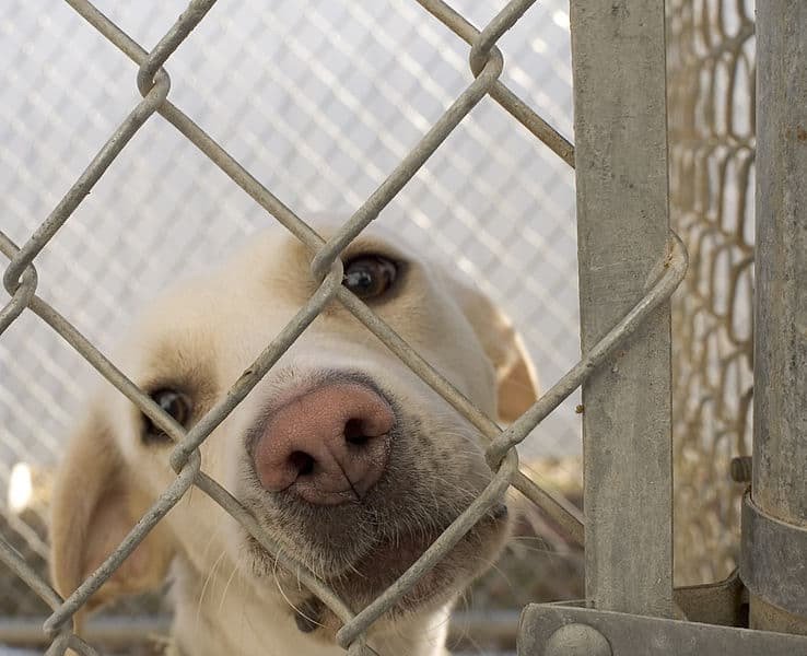 information on what is a no kill shelter