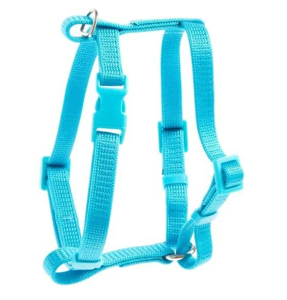 Photo of cat harness.