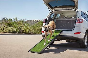 Photo of load bearing pet ramp with dog wallking down it.