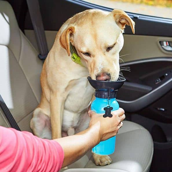 Photo with dog drinking out of Pet Travel Mug Water Bowl Bottle.