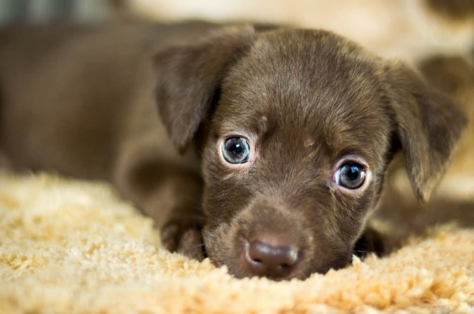 15 Steps to Introduce a Dog to a New Home