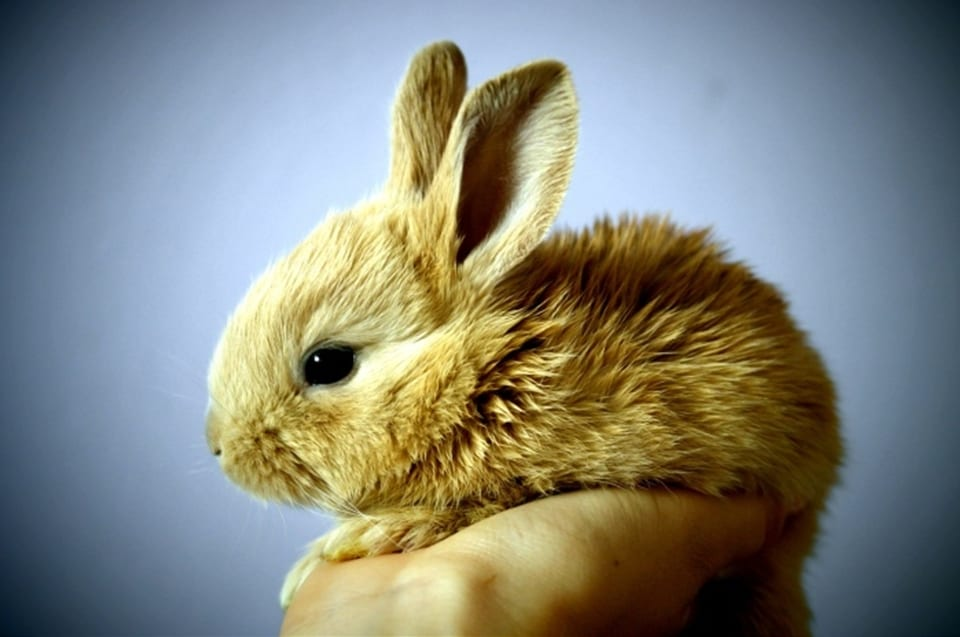 Adopt a Rabbit: 10 Reasons why Bunnies are the Best