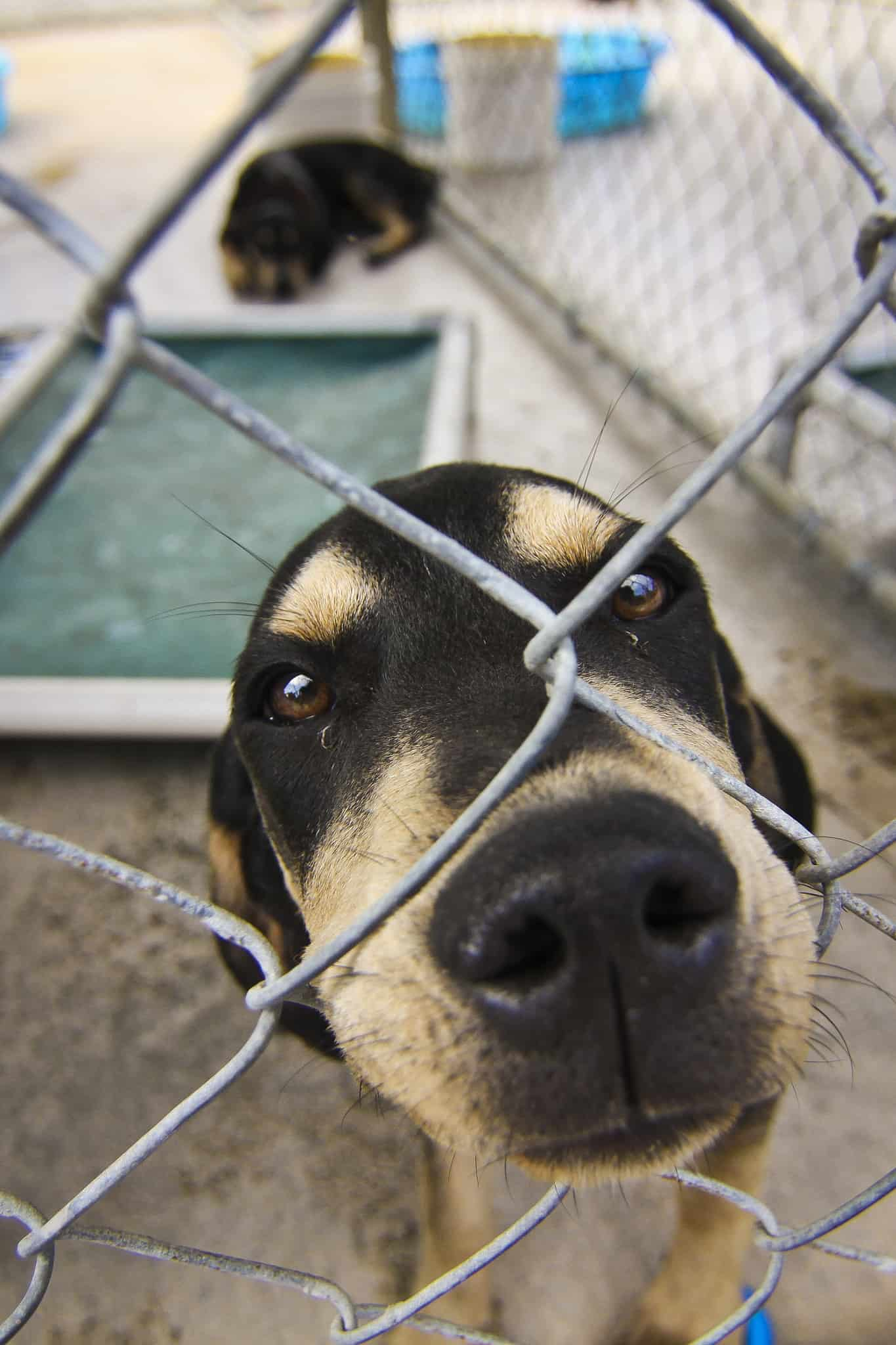 animal pet rescues dogs looking for home finding companion animal homes