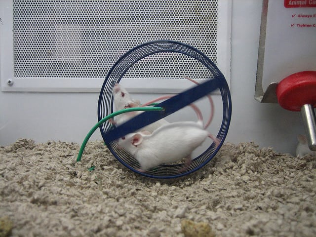 small animal rescue mice hamsters