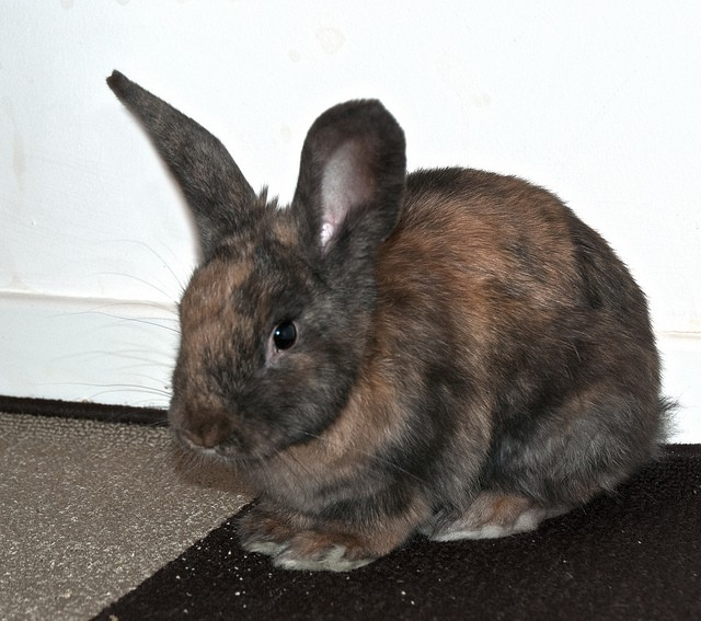 small animal rescue rodents rabbits