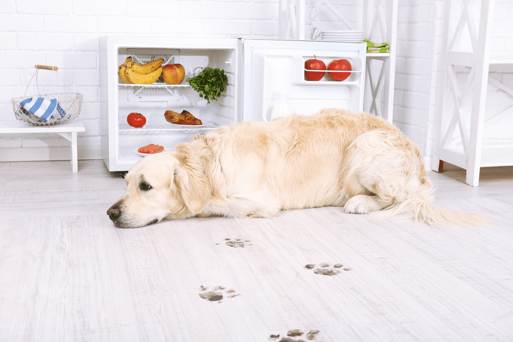 Best Indoor Dogs that are Ideal for Single Owners and Pet Lovers