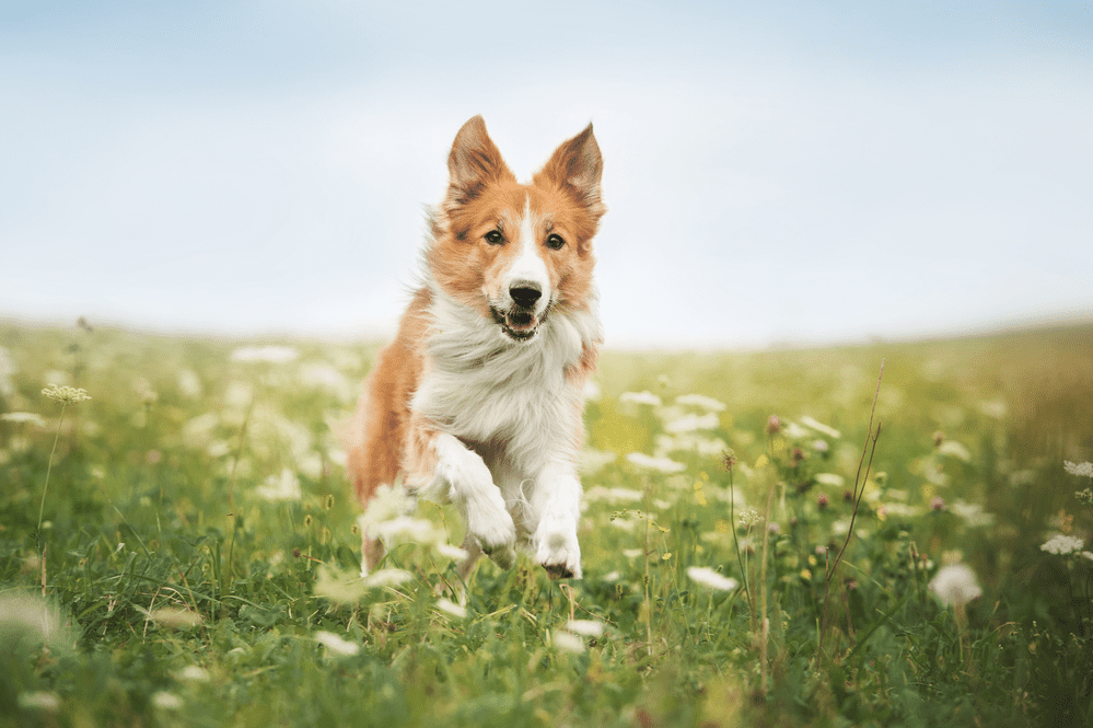 How Much Does It Cost to Spay A Dog? – Everything You Have to Know