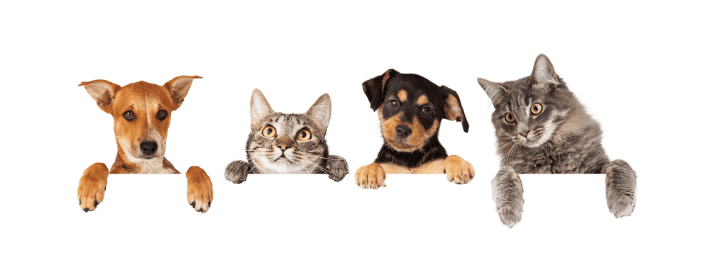 Cats and Dogs Living Together: 5 Tips to Make It Work