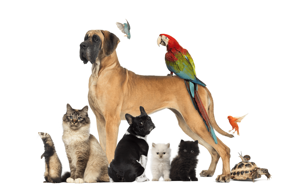 What Pet Should I Get? – The Right Time to Get A New Pet