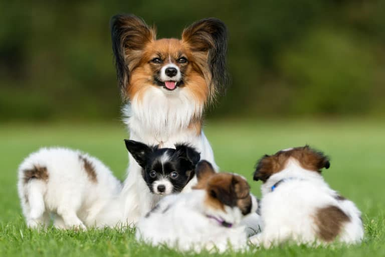 FAQs on Best Dogs for First Time Owners