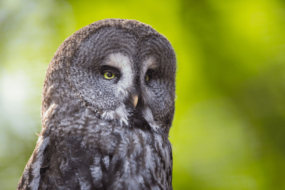 Here's What You Need to Know If You Are Considering an Owl as a Pet